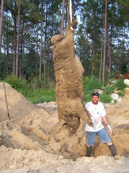 Largest Wild Boar Ever Caught for Pinterest